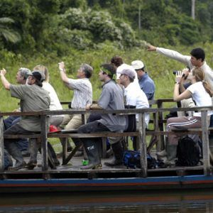 Birdwatching at Tambopata